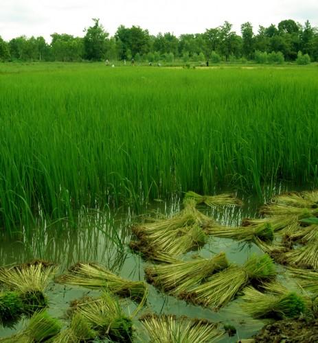 Rice Paddy Villa